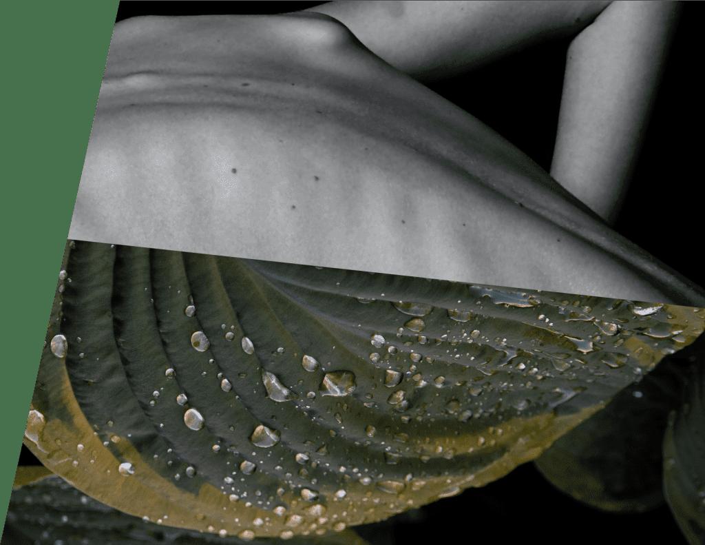 body-leaf