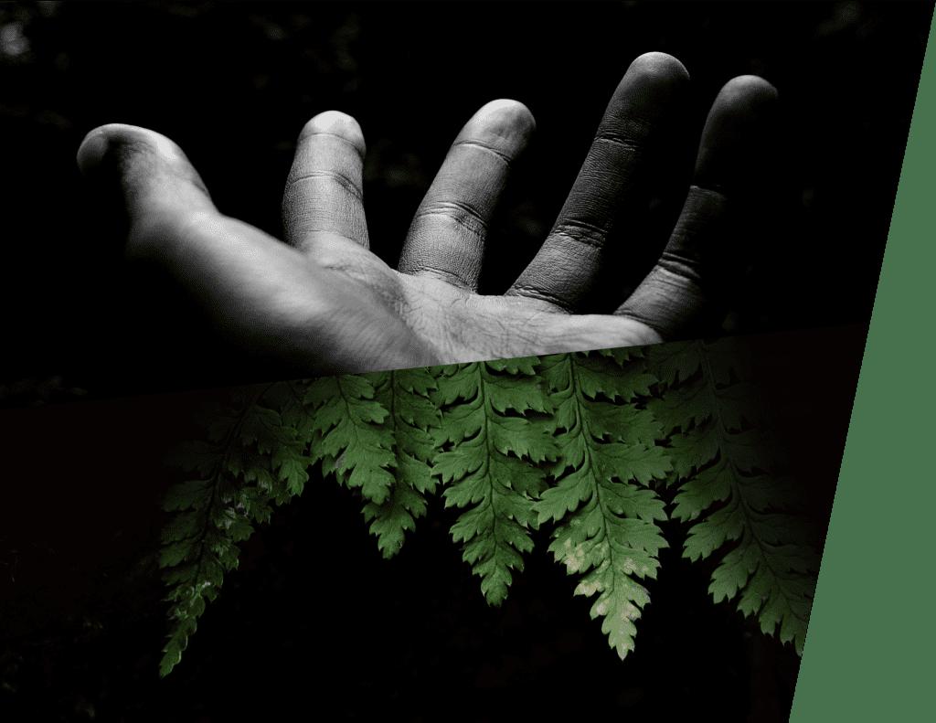 hand-fern